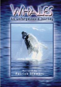 Whales: An Unforgettable Journey: IMAX